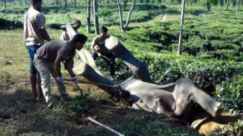 Dieser Elefant steckte in einer Rückenlage fest und wurde von Menschen gerettet, die das Unmögliche möglich gemacht haben.