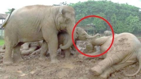 Immer wenn es regnet, reagieren diese Elefanten sehr seltsam. Sie werden überrascht sein!