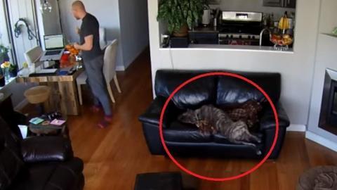 Dieser Hund fällt von der Couch... und schläft einfach weiter