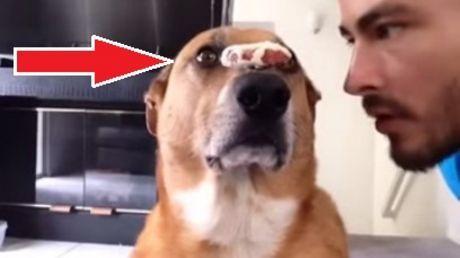 Das ist der best ausgebildetste Hund. Es ist unglaublich, was er tun kann.