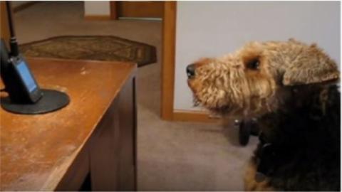 Dieser Hund antwortet seinem Frauchen am Telefon.