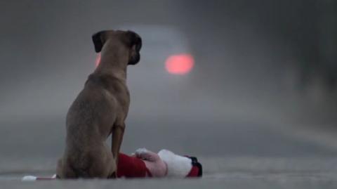 """Wenn ein Kind """"wie ein Hund"""" behandelt wird..."""