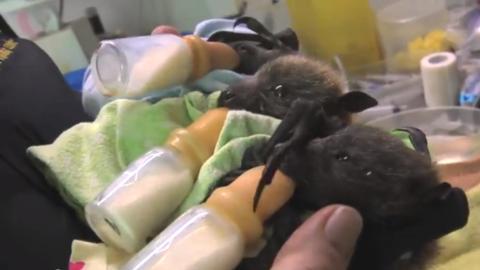 Wer hätte gedacht, dass Fledermäuse so süß sind?