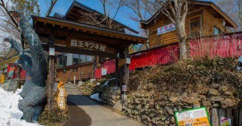 Fox Village in Japan: Ein Paradies für Füchse