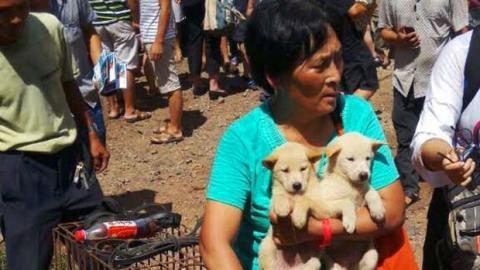 Frau rettet 100 Hunde vor Schlachtung.