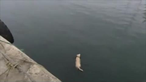 Dieser Hund schwimmt jeden Morgen mit einem Delfin. Eine ungewöhnliche Freundschaft.
