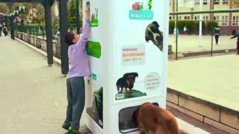 Dieser Automat bietet Futter für streunende Hunde gegen Plastikflaschen an