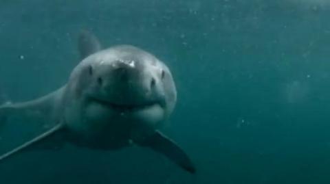 Nach einem Sprung schwimmt ein Hai ganz dicht an diesem jungen Mann vorbei. Was wird passieren?