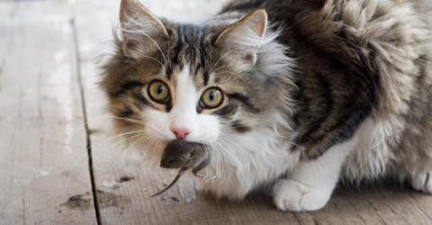 Das will deine Katze dir sagen, wenn sie dir ein totes Tier bringt