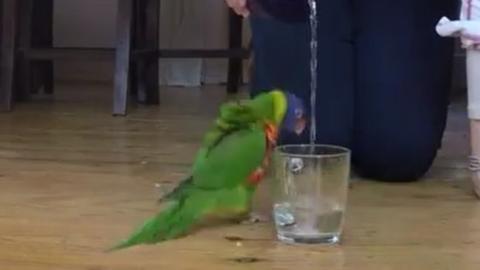 Dieser Vogel ist überglücklich mit einem Glas Wasser