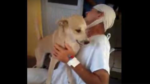 Unglaubliche Treue: Dieser Hund wartet geduldig vor dem Krankenhaus, bis sein Herr wieder herauskommt