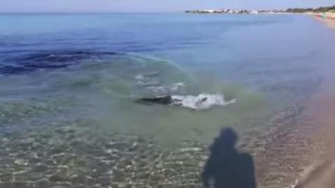 Beim Filmen taucht auf einmal dieser Hai aus dem Nichts auf!