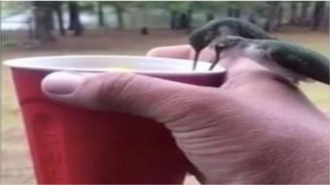 Diese Kolibris trinken aus einem Becher, den er in seiner Hand hält und setzen sich auch noch auf seine Hand