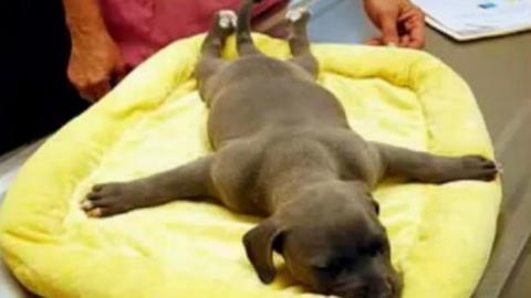 Dieser gelähmte und verlassene Hund wurde von großherzigen Menschen gerettet. Eine bewegende Geschichte!