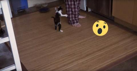 Katze krallt sich an Bein fest