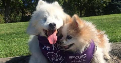 Dieser blinde Hund hat einen eigenen Blindenhund