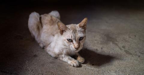 The House With A Heart Senior Pet Sanctuary: Ein Heim mit Herz für alte Hunde und Katzen
