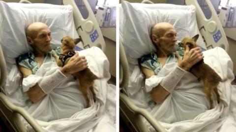 Hund sieht sein schwerkrankes Herrchen im Krankenhaus wieder. Ein bewegendes Wiedersehen.