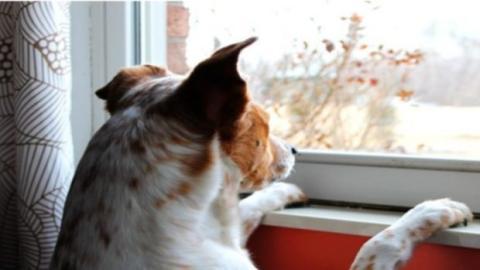 Dein Hund hat Angst, dass du ihn alleine lässt. Was ist zu tun?