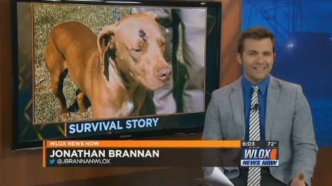 Während seine Besitzer Opfer eines Einbruchs wurden, handelte dieser Hund wie ein wahrer Held