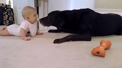 Dieses kleine Mädchen krabbelt zu ihrem Hund. Dieser beschließt, sie dafür zu belohnen