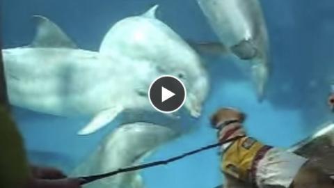 Diese Delfine sehen zum ersten Mal einen Hund und reagieren völlig unerwartet.