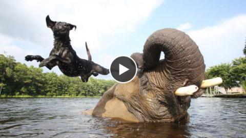 Dieser Hund und dieser Elefant sind einfach unzertrennlich - eine tolle Freundschaft!