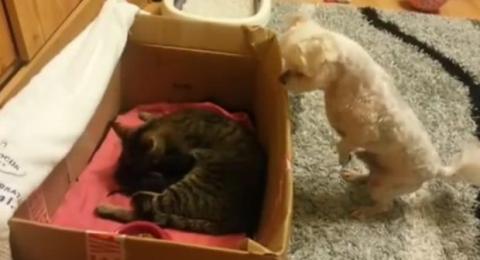 Dieser Hund entdeckt die neuen Kätzchen im Haus. Und er ist sehr fasziniert von den Kleinen!