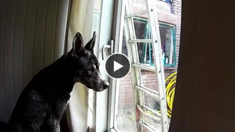 Diesem Hund gelingt der Ausbruch aus seinem Haus... Aber wie stellt er das an?