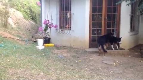 Dieser Hund wird die Angst seines Lebens haben. Sie werden nicht erraten, warum...