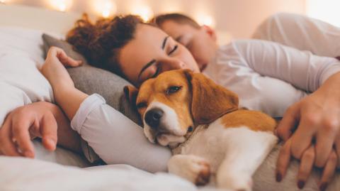 Frauen schlafen besser mit einem Hund an ihrer Seite als mit ihrem Partner
