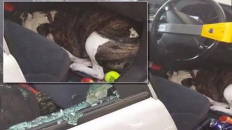 Im Sommer im heißen Auto zurückgelassen, hätte dieser Hund eigentlich nicht überleben können. Aber ein Wunder geschah.