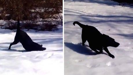 Dieser Hund hat gerade gesehen, dass es geschneit hat. Was er tut, ist toll.