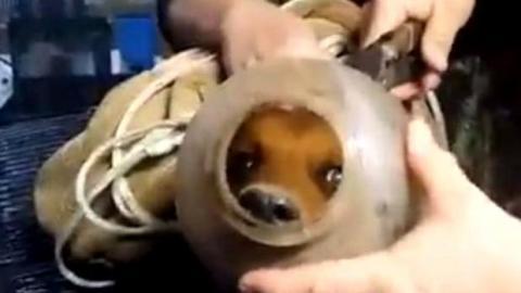 Dieser kleine Hund war in einer Flasche gefangen. Seine Befreiung ist bewegend.