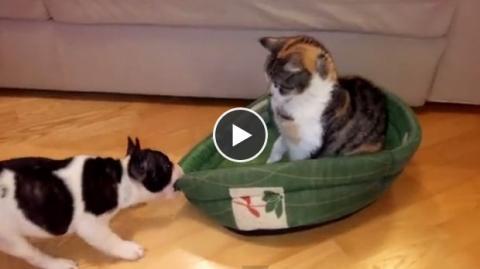 Dieser Hund will seinen Korb zurück, doch der Eindringling ist damit nicht einverstanden!