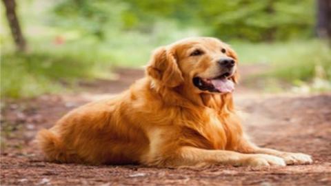Dein Hund kann viel länger leben, als du denkst. Das musst du tun