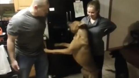Dieser Hund ist ein echter Beschützer. Er lässt nicht zu, dass man den Bauch seines schwangeren Frauchens berührt.