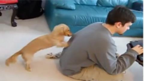 Dieser Hund versucht alles, um die Aufmerksamkeit seines Herrchens zu erhalten!