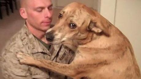 Als dieser Soldat nach Hause zurückkehrte, begrüßte ihn sein Hund auf eine unvergessliche Weise.