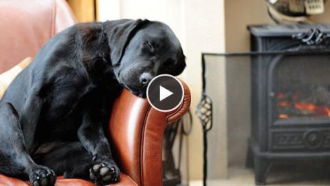 Dieser Hund schleppt sein Bett durch das ganze Haus. Warum? Sie werden schmunzeln!