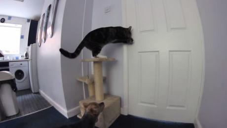 Diese Katze und dieser Hund sind richtige kleine Lümmel. Sie wissen, wie man im Team arbeitet.
