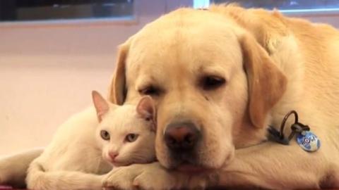 Dieser Hund und diese Katze sind die besten Freunde. Sie trennen sich niemals.