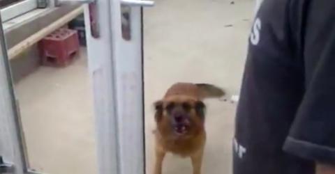Der Hund wartet vor der Tür, doch seine Besitzer lachen ihn nur aus