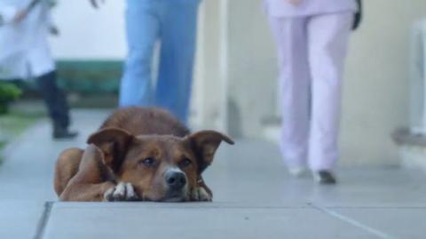 Ein Hund folgt seinem Herrchen bis zum Krankenhaus. Der Grund ist bewegend.