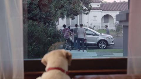 Dieser Hund wartet auf sein Herrchen - doch Sie erraten nie, warum.