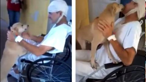 Dieser Hund hat 8 Tage lang vor dem Krankenhaus auf sein Herrchen gewartet. Sehen Sie hier seine Reaktion, als er entlassen wurde.