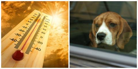 Hitze-Selbstversuch im Auto: Sie filmt sich bei sommerlicher Hitze im Auto, um nachzuempfinden wie sich Hunde in überhitzten Fahrzeugen fühlen