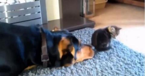 Diese Hunde wollen alle gern Freundschaft mit Katzen schließen...