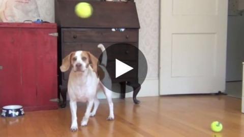 Dieser Hund wurde zu seinem Geburtstag so richtig verwöhnt. Sein Geschenk ist einfach unglaublich!