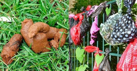 Hundekot in Plastikbeuteln an Bäumen und Zäunen: Das steckt dahinter